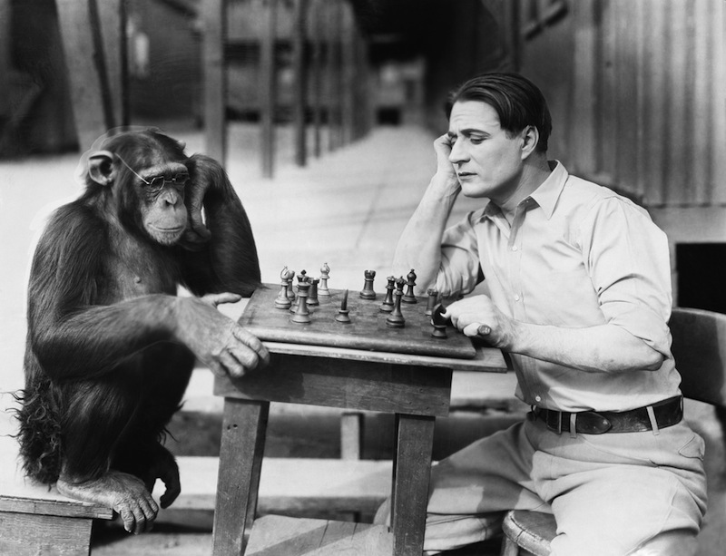 chimpanzee-chess-140205